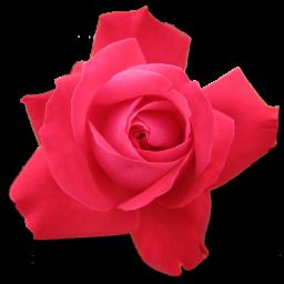 Rose Cerise icon